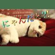 CAT PHOTO STAMP SHUSHU