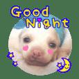 ヴィーガンの保護犬 英語版 NGO LIA公認