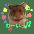 くるみんとのゆるかわハムスター日和2♡