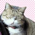 猫のニャンピーちゃんスタンプ