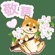 花よりわんこ(敬語、柴犬、桜、春)