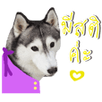 Siberian Husky No 11