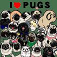 WE LOVE PUGS