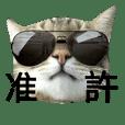 台灣本土貓的日常生活