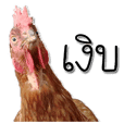 The Naughty Hens