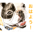 Dogs&Cats Greetings(Japanese)
