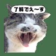 Tashiro island  NekoTaro 01