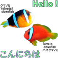 OKINAWA'S TWO FISH LOOK EXACTLY LIKE