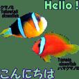 沖縄の魚のそっくりさんの英会話と日本語