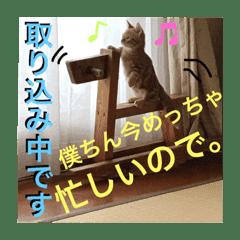 マンチカンのレオさん - LINE スタンプ | LINE STORE