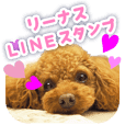 Linus of Toy Poodle - Daily Conversation