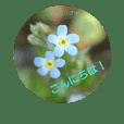 野の花スタンプ 春の巻