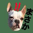 36犬種 日常会話