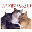 Expressive Cats' Stickers 2