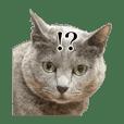 日常で使える猫(灰色)