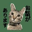 がんばれココちゃん4