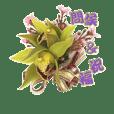 Sarah flower series *1