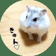 hamster ranmaru