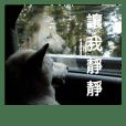 白色柴犬的崩壞日常 各種OS的狗事情