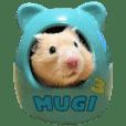 Golden hamster Mugi's life3