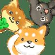Shiba Chihuahua Toy poodle