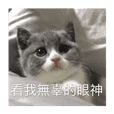 小包子貓咪