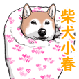 Kohachannel shibainu
