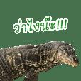 Giant Varanus salvator