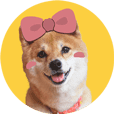 Shiba Inu LILY - Everyday Greetings