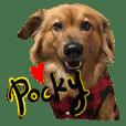 波奇狗狗的日常生活