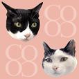 BLACK&WHITE CUTE CAT