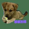 I Love dog's 3