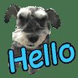 Hello Choko