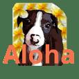 italian greyhound 'NALU' his daily life