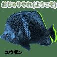南大東島の魚が丁寧な言葉を話す