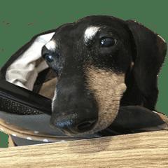 黑皮狗的生活3