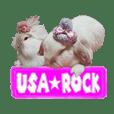 USA★ROCK