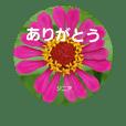 tomtomflowers