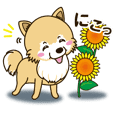 A sticker willingly. Pomeranian Summer