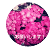 草花たちの言葉(バラあじさいクローバー)