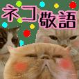 『敬語』【ネコ写真】ネコパラダイス