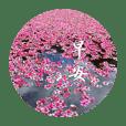 美麗花朵與風景問安長輩圖(ㄧ)