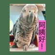 立川店鳥-火力全開版