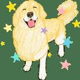 golden retriever motion sticker(English)