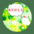 Ricebirds