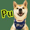 Shiba_Pu (Caring Dog)