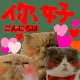 『中国語』『台湾語』ねこ実写スタンプ