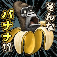 Gorilla gorilla6