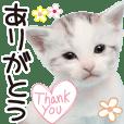 Baby Cat Tokyo