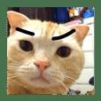 Keita is cat